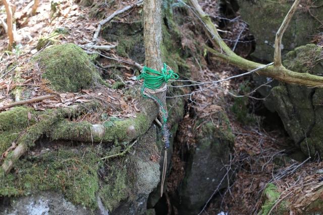 Noose on tree